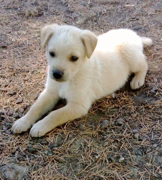 Cute! Baby dog ??