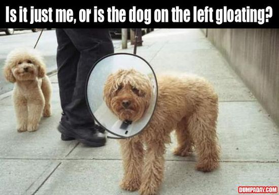 not the cone of shame!