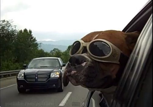 Funny dog clips compilation to honor man's best friend on National Dog Day