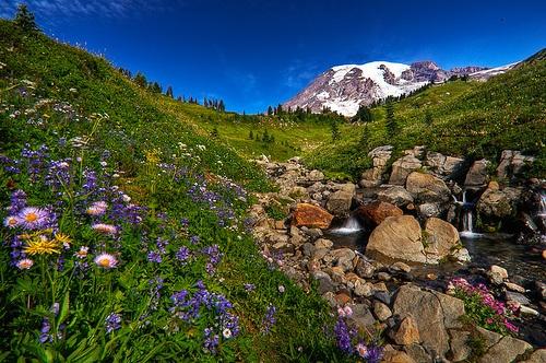 Dead Horse Creek Trail-Mount Rainier