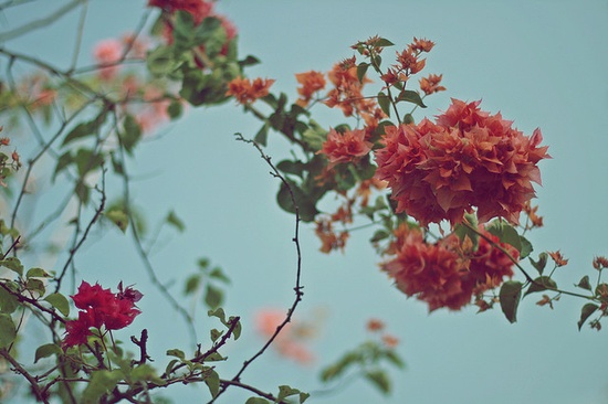 Flores by Giselle Azevedo