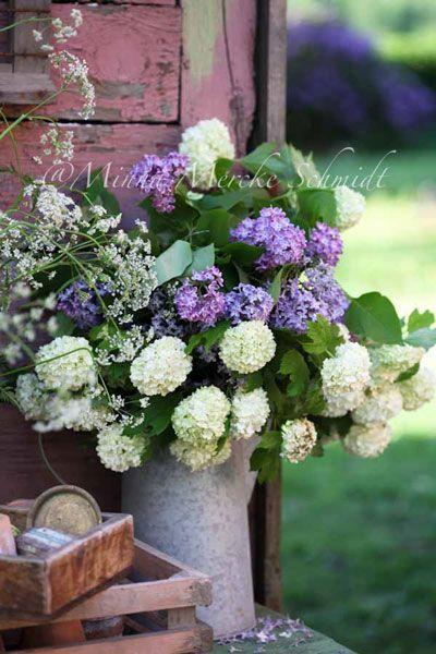 Lilacs & Viburnum...