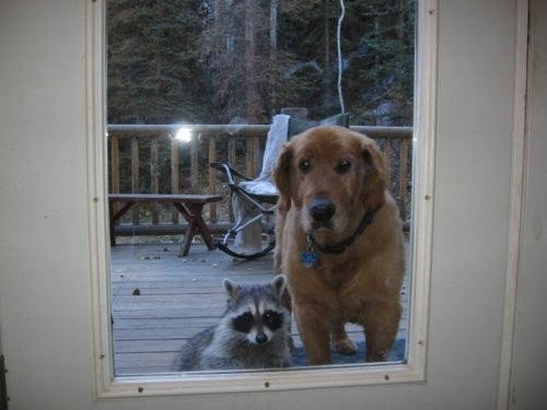 Knock, Knock ... Can my friend come in, too?
