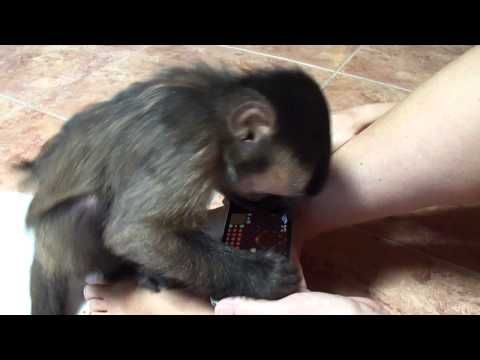 ? Baby monkey Nala still loves video games - YouTube