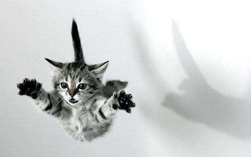 Baby cat, cute