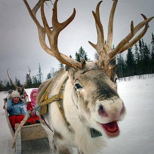 Winter reindeer sleigh ride