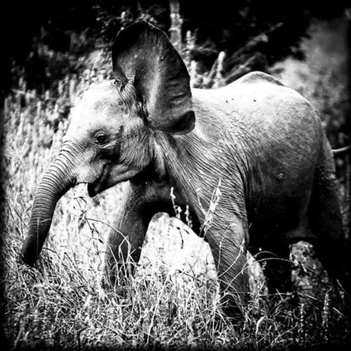via Animal Photography by Laurent Baheux