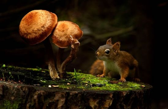 10 Great Close Ups Animals And Mushrooms
