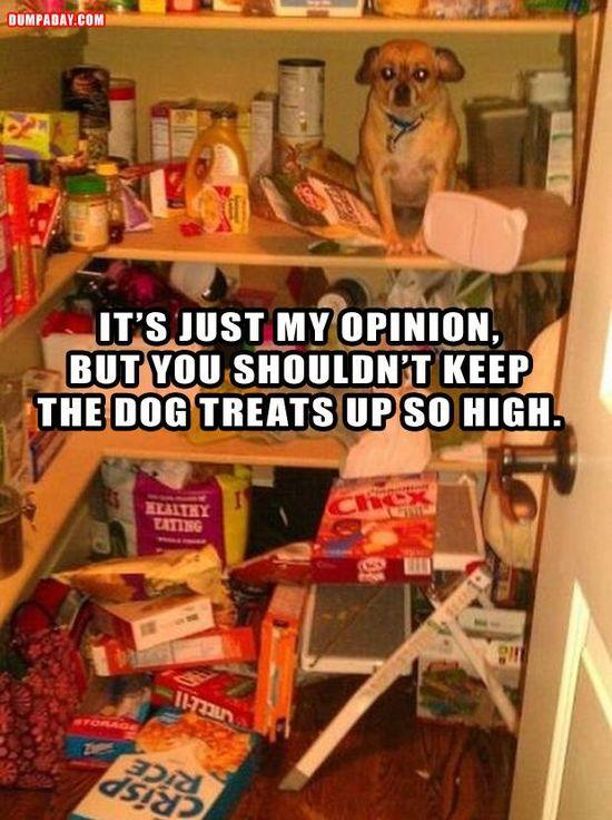 Dog treats. Good advice!
