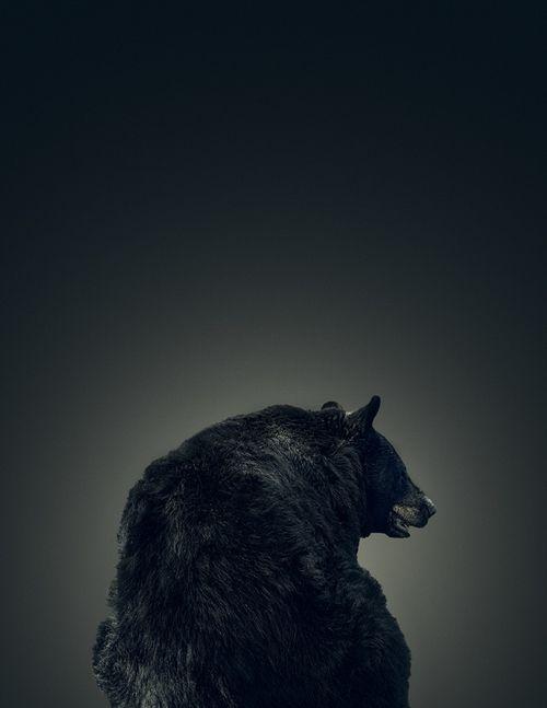 The bashful black bear (by DEREK HEISLER)