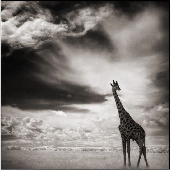 Amazing Animals Photography by Nick Brandt #amazing #animals #wildlife #horses #cats #dogs #birds #reptiles #pets
