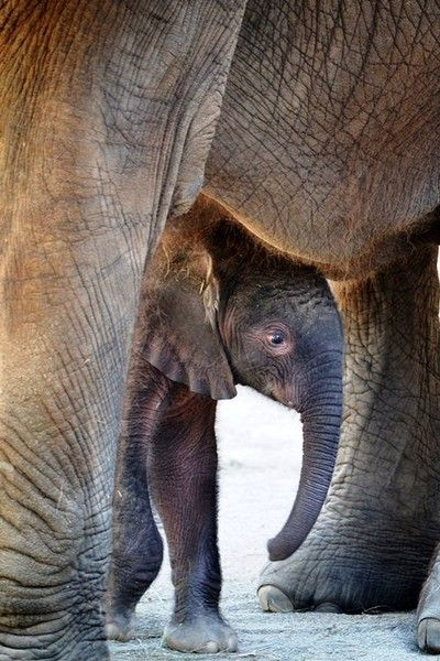 Elephant adorable-animals