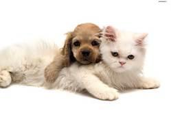cute pets - Bing Images