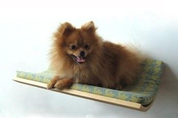Cute pet platforms!