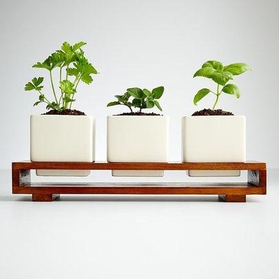 growing herbs window sill - Google Search