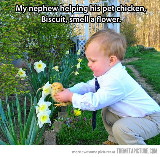 This kid loves his pet chicken…