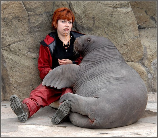 baby walrus moment