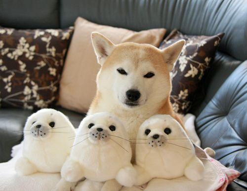 Dog with stuffed animals
