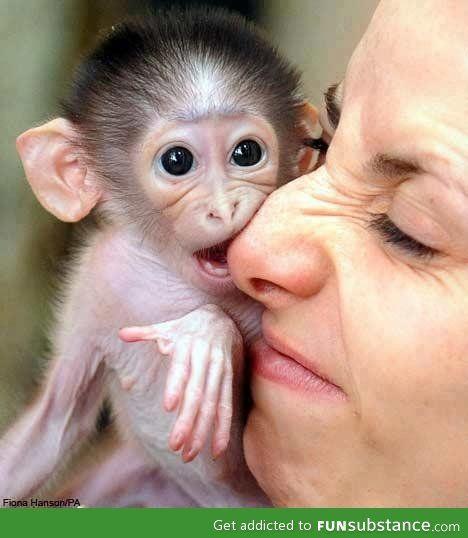 Cute Pet :)