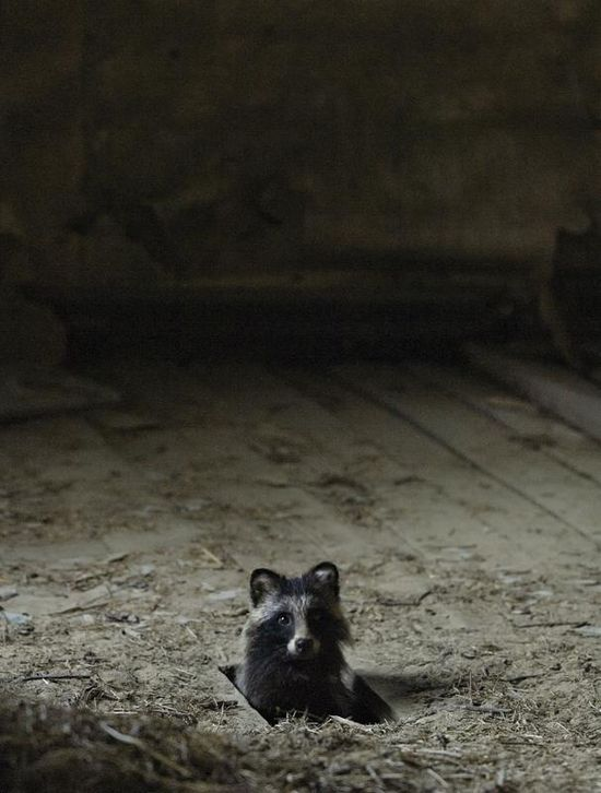 An abandoned house in the woods and its wild animals. Amazing pictures by Kai Fagerstrom