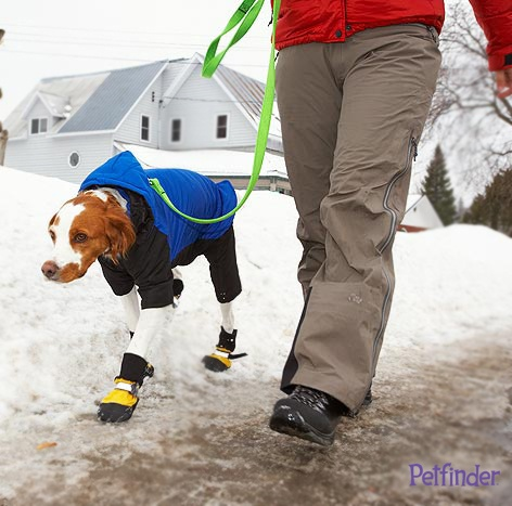 Keep your pets safe during the #blizzard! Read our cold weather tips and save for the future!