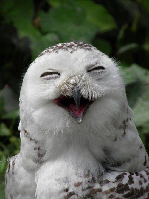 a happy owl