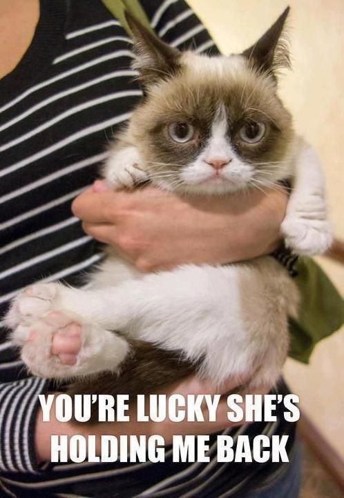 I love the Grumpy Cat! Can I take him home?
