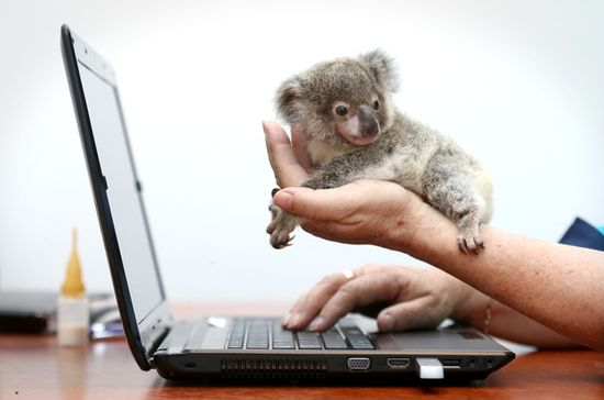 Raymond was found abandoned on the side of the road in Brisbane, Australia. He was named after the man who found him.