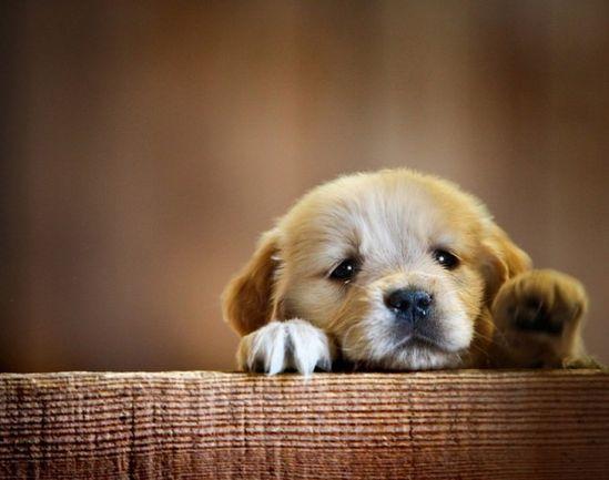 21 Cute Baby Animals