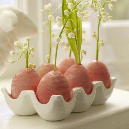 Egg Shell Garden