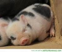 cute baby animals sleeping - Bing Images