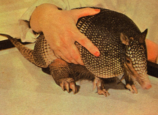 Wild Animal Pets: A Golden Hobby Book