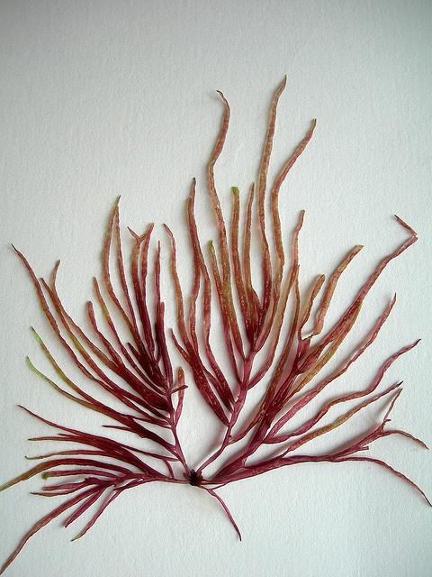 cory janiak