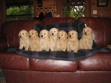 Baby dogs :)