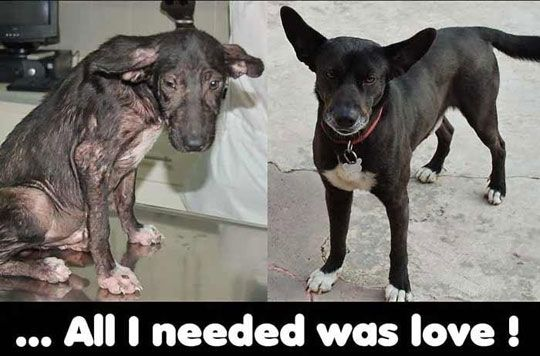 Rescued Dog: Before And After