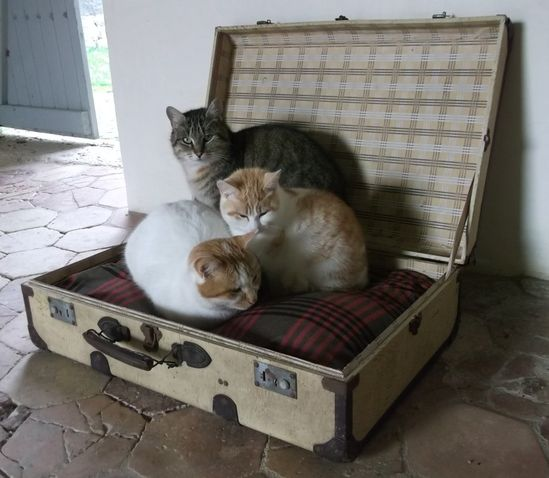 {kitties in a suitcase} makes me want to go on a trip! :)