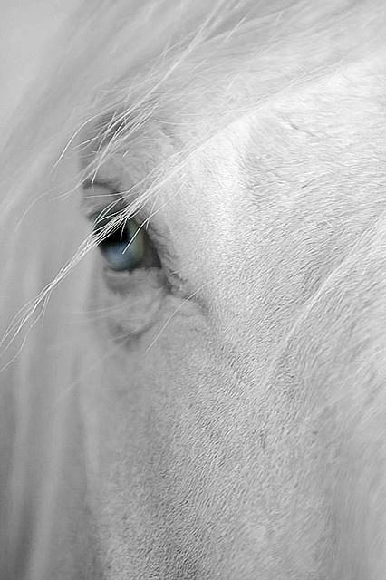 Blue eyes - horse  r Slipper had deep ocean blue eyes