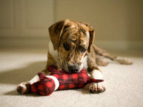 8 Surprising Pet Hazards  Learn how to safeguard your cat or dog against potential dangers at home    Read more: Pet Hazards - Foods Dogs Should Not Eat - Woman's Day  Protect Your Pet