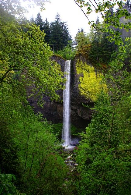 Latourelle Falls    Columbia River Gorge
