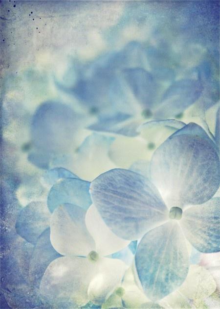~ I love blue hydrangea