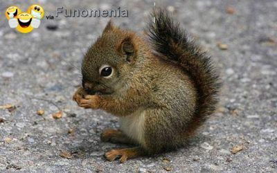 baby animals - OhEmGee baby animals (21 photos) :baby squirrel #fuzzy #baby #animal #cute #adorable #amusing #pictures #joke #funny - Funomenia