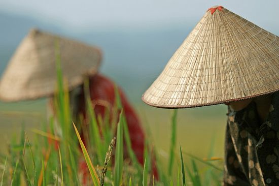 Vietnam by Petit dragonhttp:/...