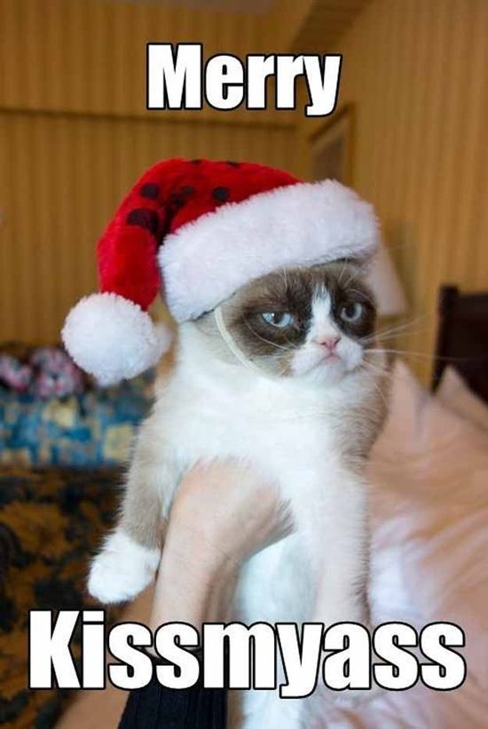 laughed my ass off at this! ... oh grumpy cat