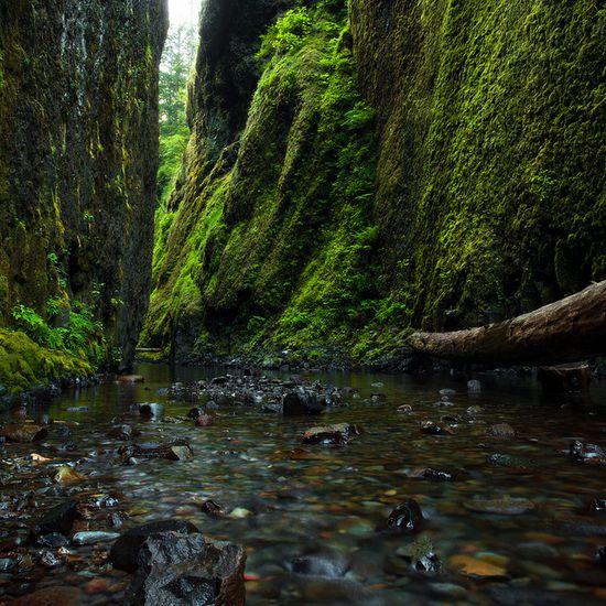 Oneonta Gorge near Portland #Oregon #jsiglobal