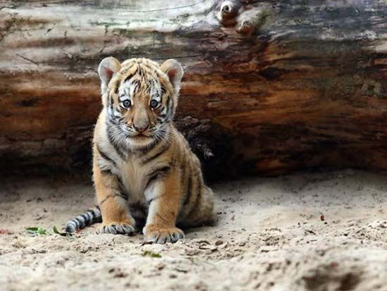Lovely Baby Animals