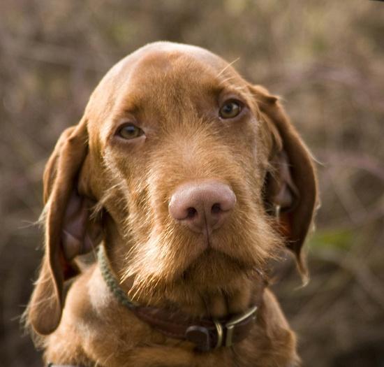 Beautiful dog ?