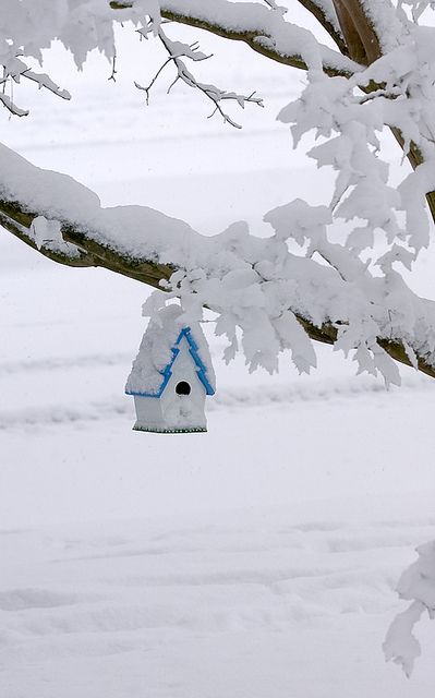 birdhouse in the snow.