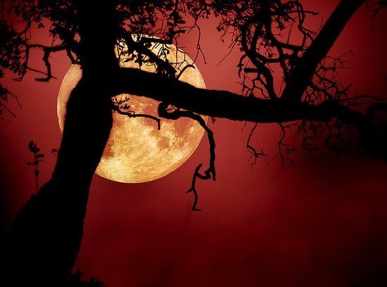 lovely pic of moon and tree