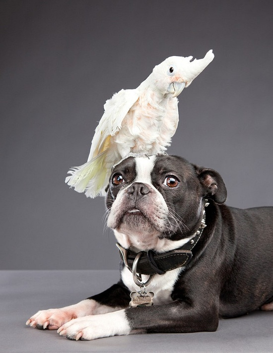 Okay little dog....wait for it....wait for it....  Carli Davidson Pet Photography