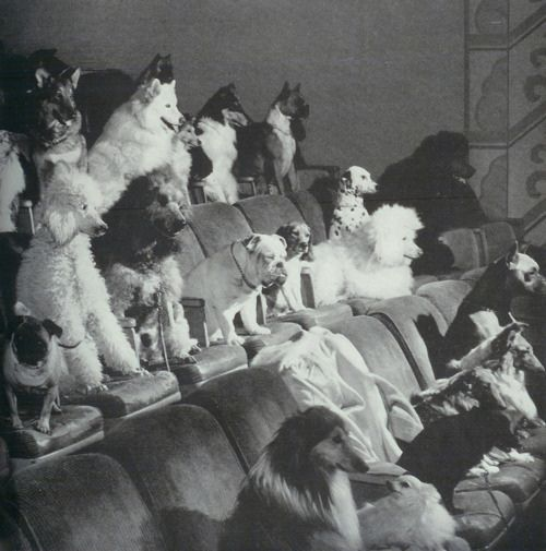Hmmm, looks like the theater's gone to the dogs :D #cute #vintage #dogs #puppies #animals #theater #bulldog #poodle #dalmation #collie #pug